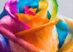 Розы со смыслом