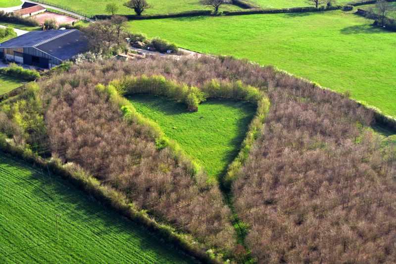 Лес, посвященный утраченной любви