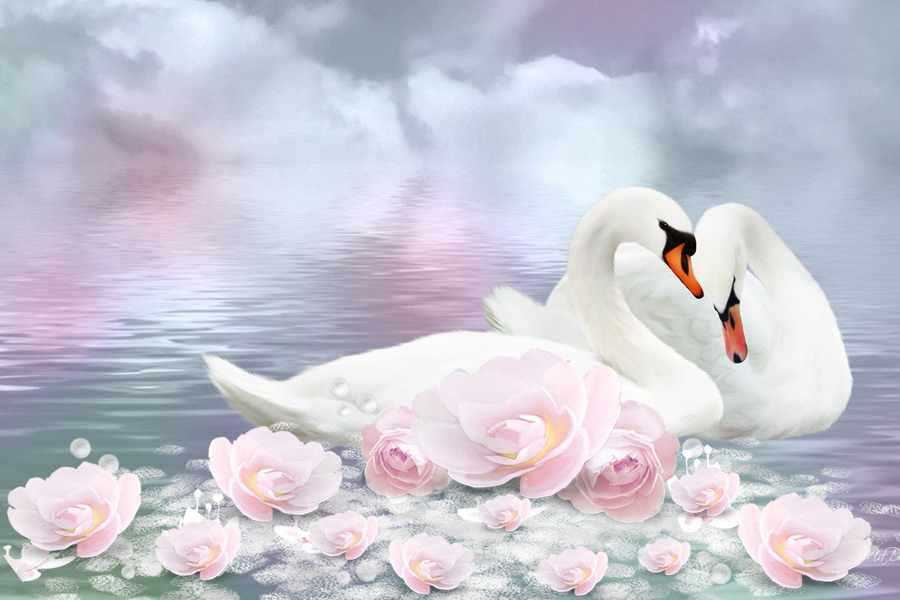 Символ любви: лебедь