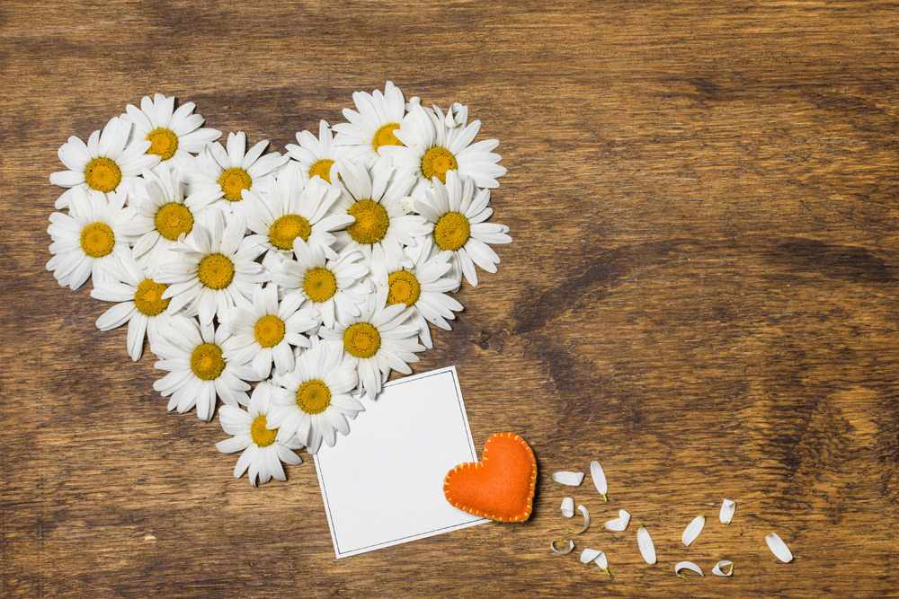 Ромашка — символ любви и верности