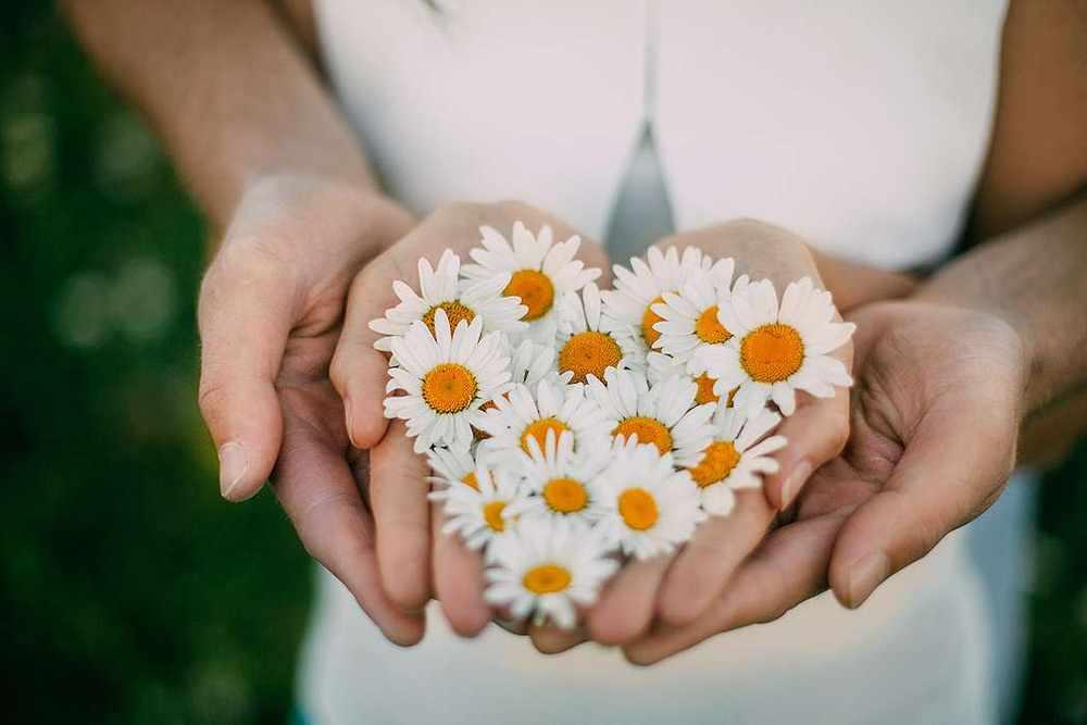 Ромашка — символ любви и верности в России